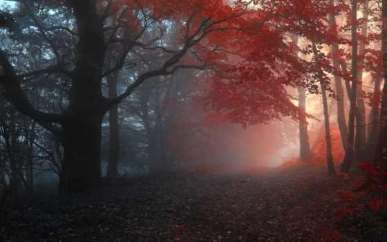 осень, туман, trees