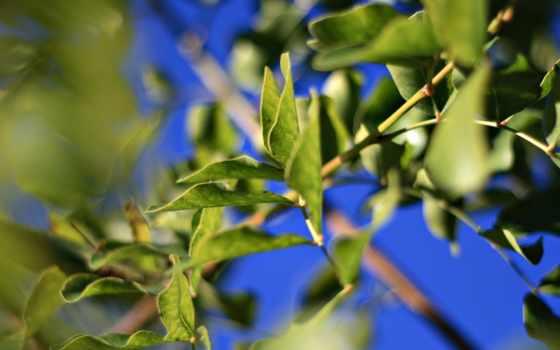 листва, branch, зелёный, всех, которых, тег, blue, есть, дек,
