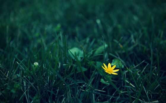 iphone, ipad, yellow, plus, цветы, машины, flowers, cvety, одинокий,