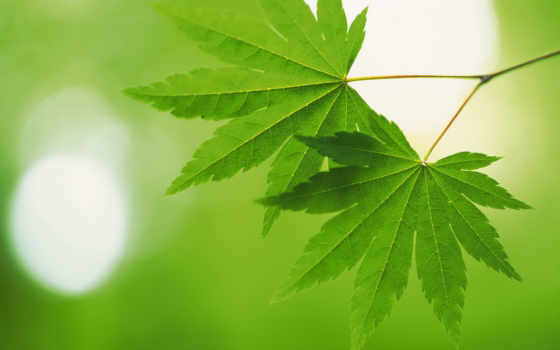 green, leaves, nature, зеленые, свежий, лист, leaf, download, блики, размытость, desktop, plants, macro, depth, field,