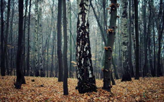 природа, осень Фон № 22471 разрешение 1920x1200