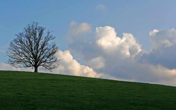 devushki, самого, большого, обладательница, hills, mayra, бюста, мире, майра, все, one, hill, русские, дерево, крещенских,