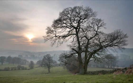 туман, луг, random, изображение, sundown, со, trees, winter, дерево,