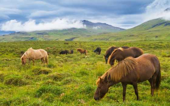 iceland, лошади, горы