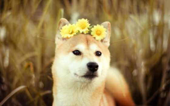 самые, мимимишные, свете, собаки, собак, zhivotnye,