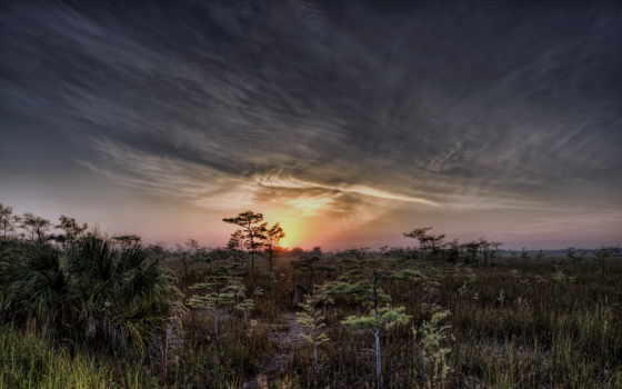 лес, закат, лесом, природа, хвойным,