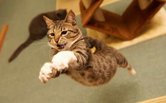 кот, прыжок, кошки, зубы, лапы, прыжке, red, tail,