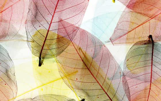 листва, макро, листья, фотообои, abstract, зелёный, прозрачный,