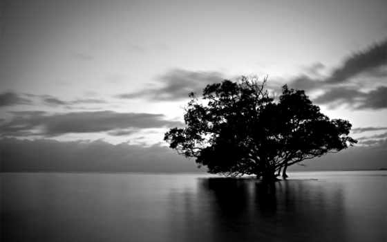 дерево, чёрно, белое, water, природа, тучи, воде, белые, trees,