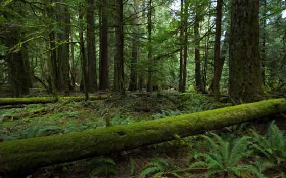 mobile, природа, лес, телефон, trees, desktop, осень, landscape,