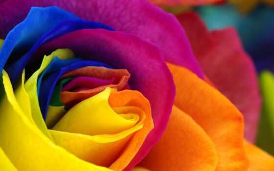 цветы, экран, тв, взлёт, роза, радуга, плоский, ginza, вести, wide