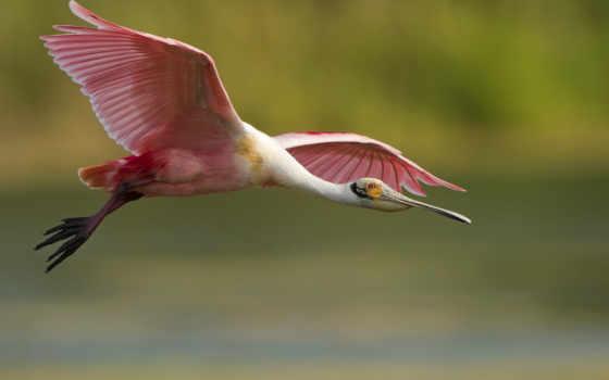 zhivotnye, birds,