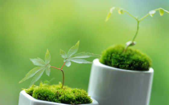 растительность, декоративные, эти