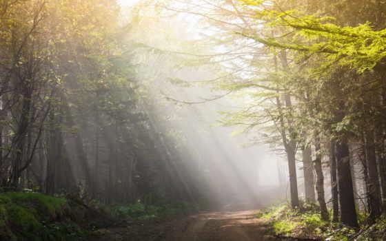 пейзаж, утро, svet, лучи, sveta, дорога, priroda, деревя, kartinka,