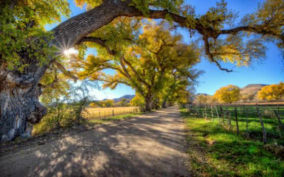 arizona, долина, дорога, sun, trees, череп, usa, roads, scully,