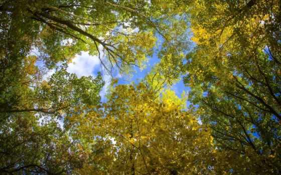 trees, crown, осень, природа, листья, небо, дерево, sunny, лес,