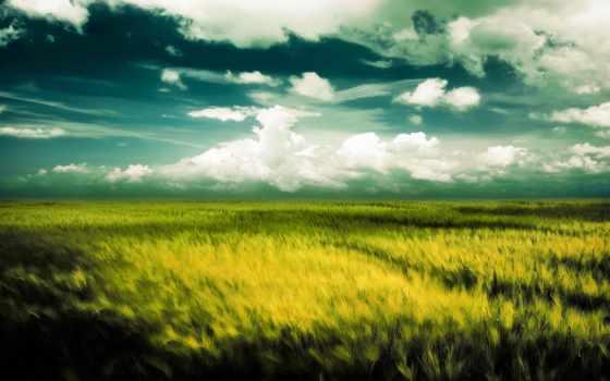 ветер, поле, oblaka, колсья,