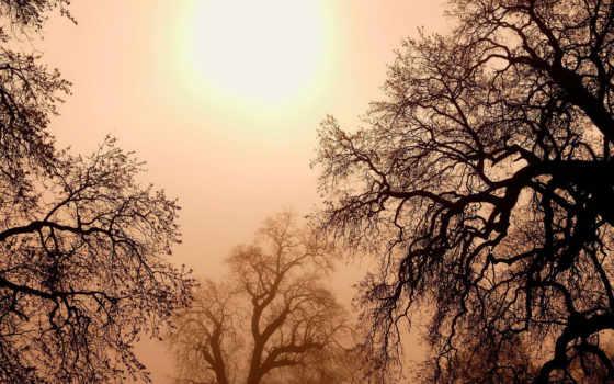 деревья, солнце