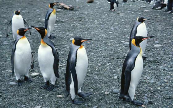 animal, penguin
