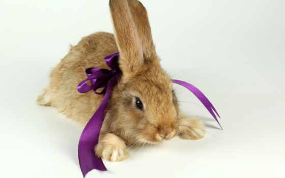 кролики, животные, марта