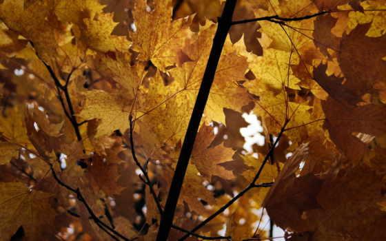 природа, facebook, covers, cover, осень, share, high,