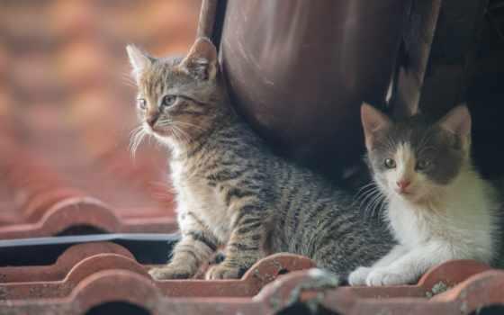 пара, photos, малыши, cats, тема, хорватия, flickriver, котята,
