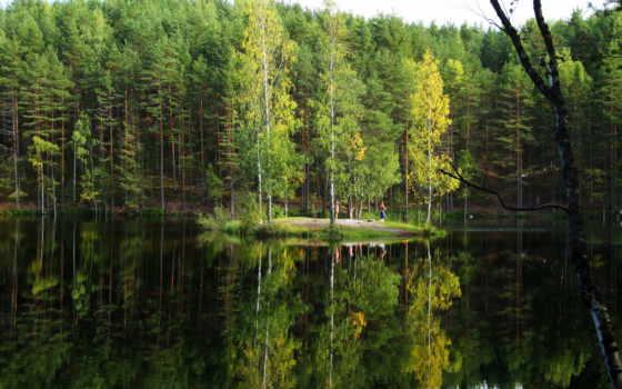 лес, природа, леса, россии, еловый, ёль, российской, природы,