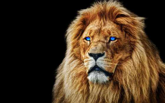 lion, глаз, blue, морда, animal, льва, pride, фото, фон, black