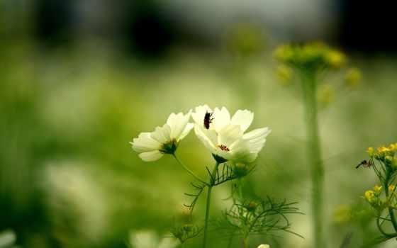 цветок, зелёный