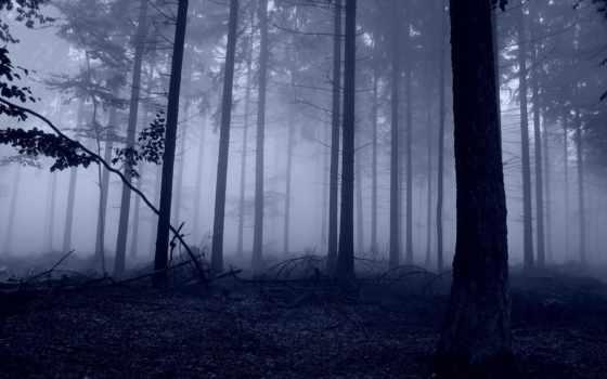 деревья, природа
