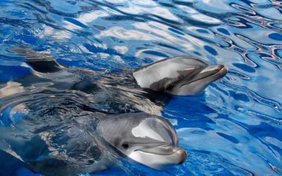 дельфины, животные, gdefon