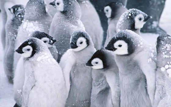 пингвины, пингвинов, установленные