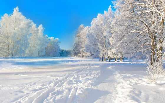 winter, снег, trees, природа, день, trail, зимняя, красиво, лес, time, разделе,