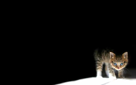 black, телефон, mobile, совершенно, страница, свет, time, котенок, dark,