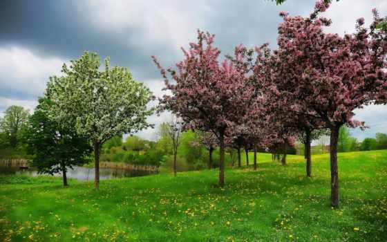 primavera, hill, parede, paisagem, papel, пруд, trees, весна, landscape,