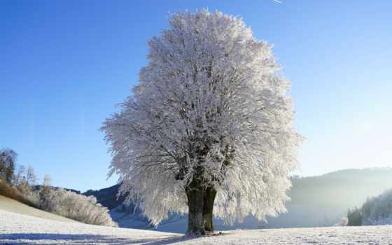 снег, landscaping, greenroots, tapety, darmowe, more, nieg,