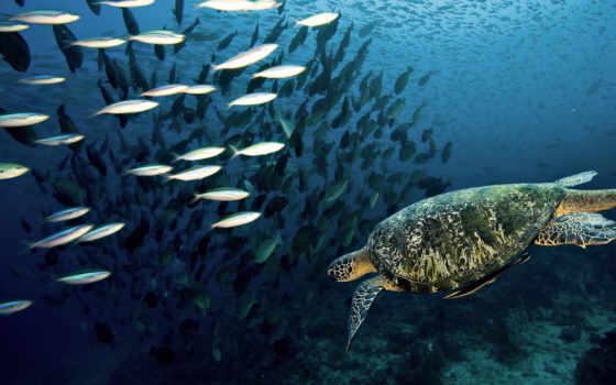 underwater, world, овцы, fantasy, волки, черепахи, danbo, toad, зверушки,,