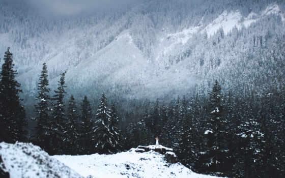 коллекция, лес, elizabeth, winter, природа, card