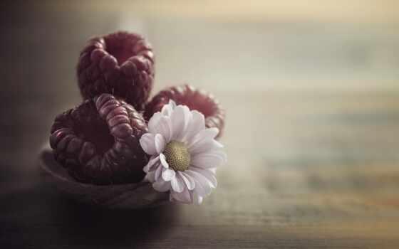 цветы, картинка, ягода