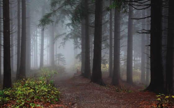 fore, природа, foggy, устройство, mobile, дорога, лес, дерево, тропинка