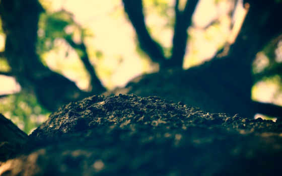 дерево, кора Фон № 39806 разрешение 2560x1600