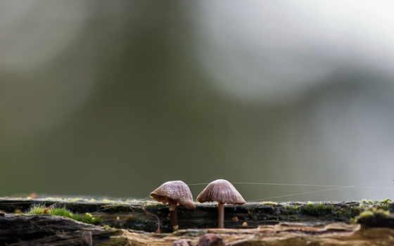 mushroom, infected, природа