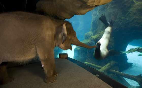 small, слоник, zhivotnye