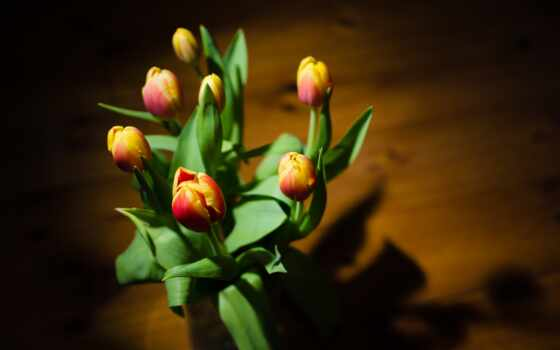 flowers, цветы, tulips, widescreen, утро, many, yellow, stock, daisies,