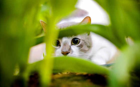 кошки, кот, собаки, траве, прячется, банка,