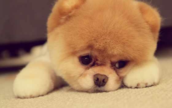 щенок, animal, собака, love, funny, расстраивать