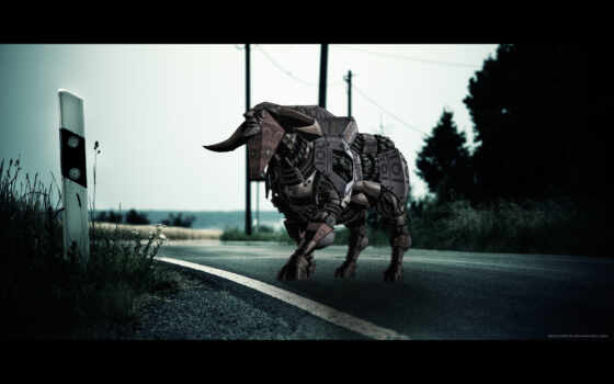 фото, bull, free, креатив