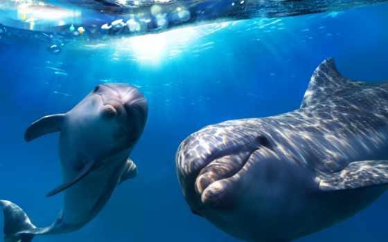 водой, под, дельфины