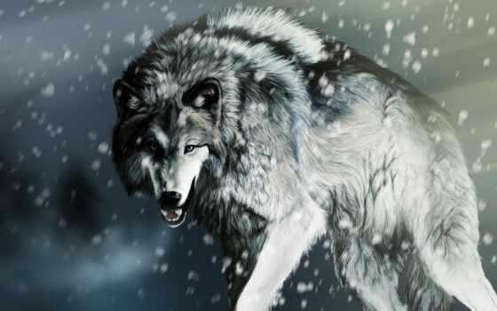 волк, снег, волки, рисунок, hunting, волка, apk, найти, zhivotnye, волками,