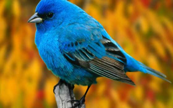 blue, zhivotnye, you, лаборатория, аллея, ala, тоо, цветотерапия,